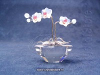Orchid Rhodium