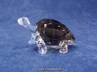 SCS Galapagos Tortoise