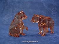 SCS - Bear Cubs
