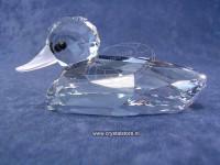Mallard - Duck