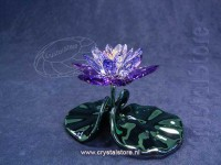 Waterlily, Blue Violet
