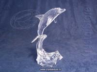 Dolphin Maxi