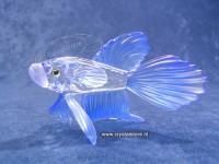 Siamese Vechtvis blauw