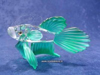 Siamese Fighting Fish (green)